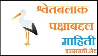 white stork bird information in marathi