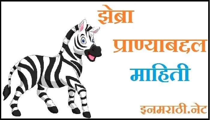 zebra information in marathi