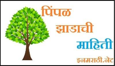 peepal tree information in marathi