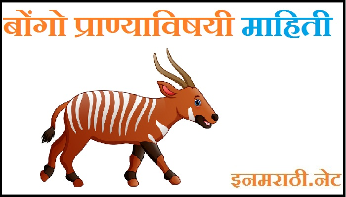 Bongo Animal Information in Marathi