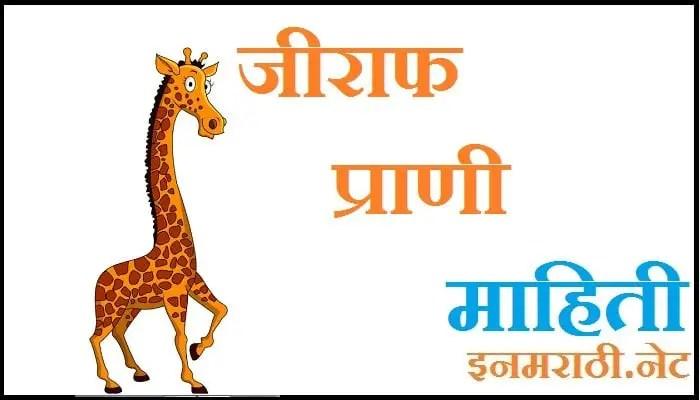 giraffe information in marathi