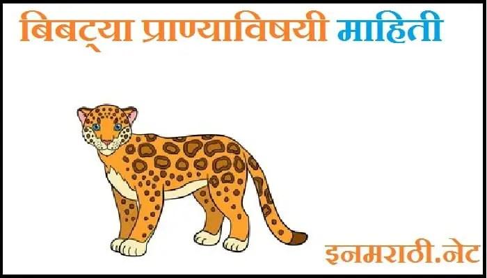 jaguar animal information in marathi
