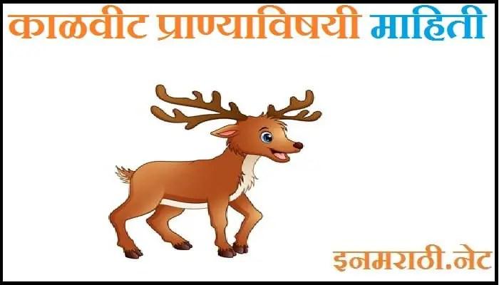 Kalvit Animal Information in Marathi