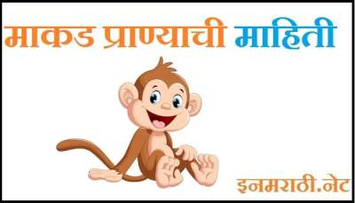 monkey information in marathi
