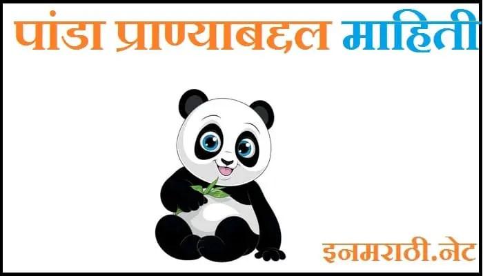 panda information in marathi