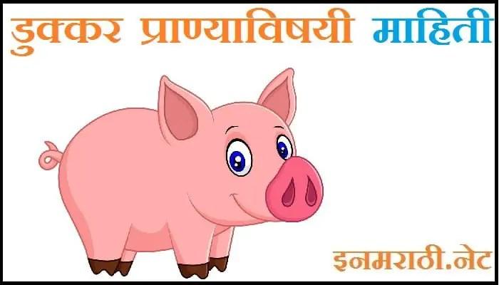 pig information in marathi