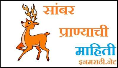 sambar animal information in marathi