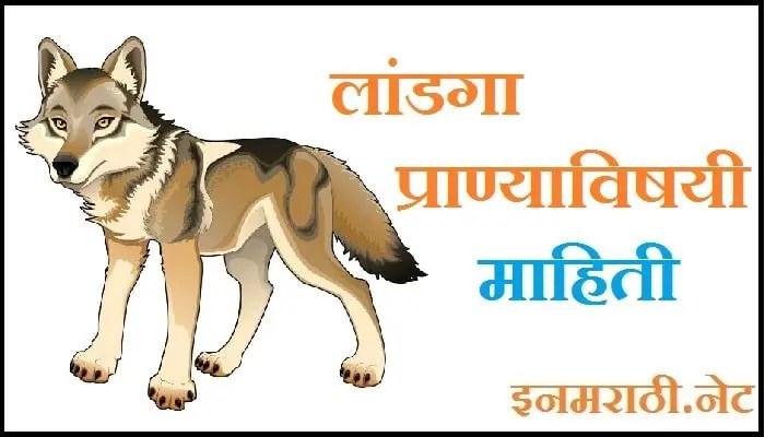 wolf information in marathi