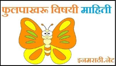 butterfly information in marathi