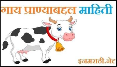 cow information in marathi