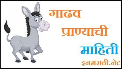 donkey information in marathi