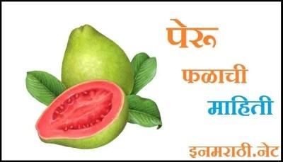 guava information in marathi