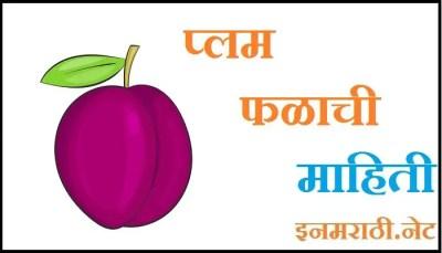 plum fruit information in marathi