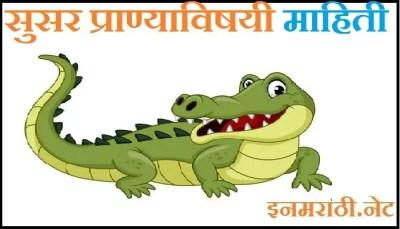 susar animal information in marathi