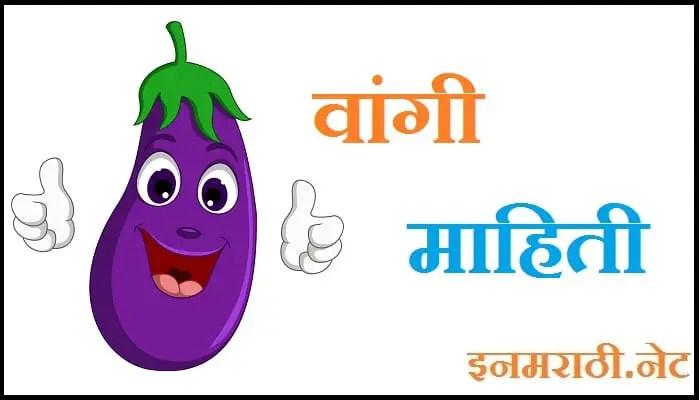 brinjal information in marathi