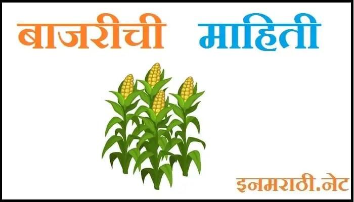 millet in marathi