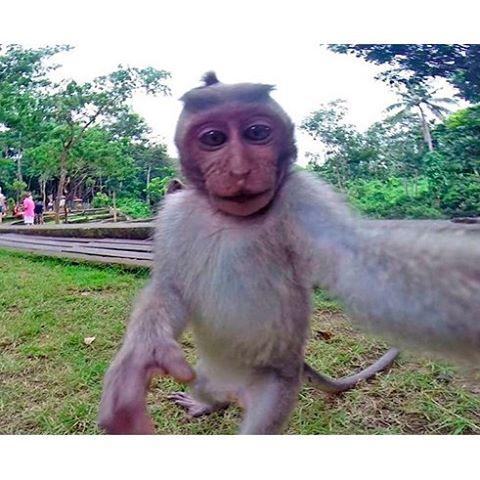 Приехал на Бали, вот думаю куда сходить потанцевать?))) I came to the Bali, and thinking where to go dancing? #кута #бали #нусадуа #джимбаран #bali #nusadua #uluwatu #убуд #ubud #jimbaran #nusaduabeach #nusaduabali #kudetabali #kuta #baliflowers #skygarden #legian #balangan #padang #seminyak #indonesia #индонезия #batur #batur #agung #агунг #серфинг #surfing #чангу #caangu