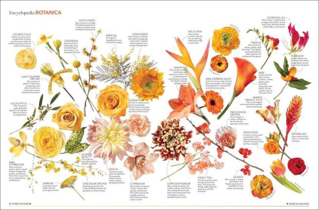 знаем все о цветах на бали
