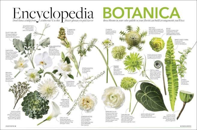цветы и растения бали
