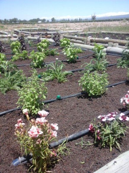 Huerta de Ruca Malen (Gentileza)