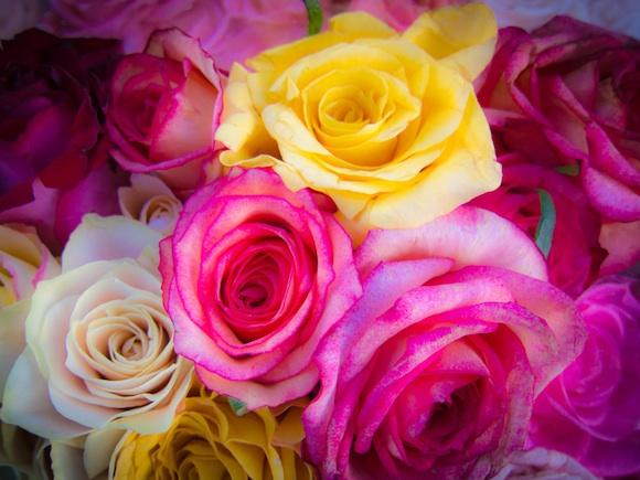Roses - Menlo Park Farmers Market