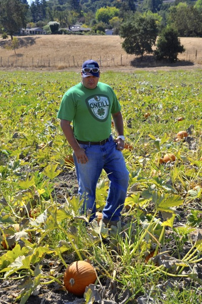 Deano inspects pumpkins at Webb Ranch