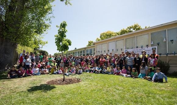 1,000 tree_Canopy