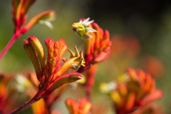 Dan_red flowers