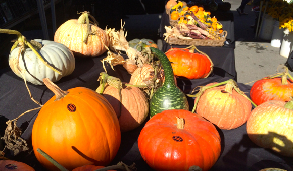 Cozzolino pumpkins at farmers market