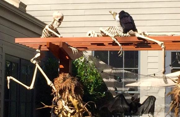 Skeleton and vulture_Bay Laurel