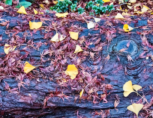 leaves-on-stump-1