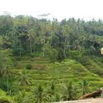 guided tour bali rice paddies 01