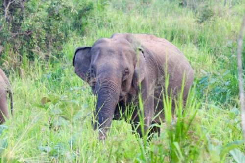Wild Elephants at Hurulu Eco Park, Sri Lanka