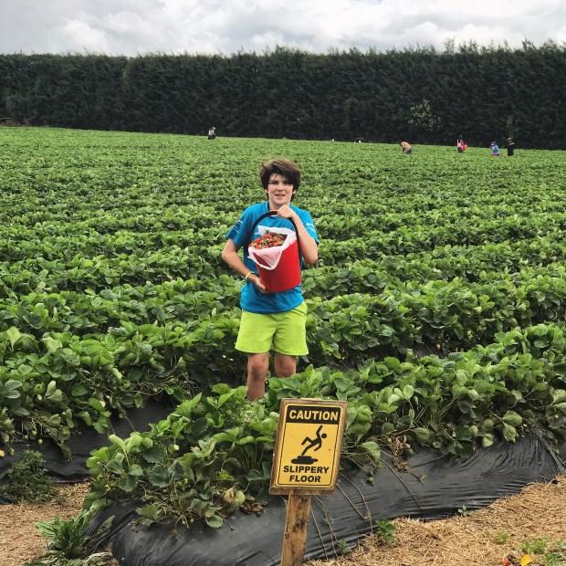 My best helper at strawberry picking!