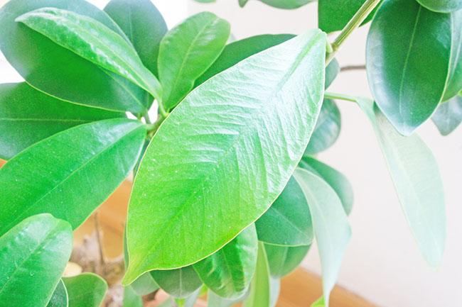 urban jungle bloggers botanical zoom bonsai schräg