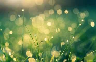 green grass with bokeh lights