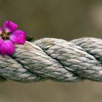 rope with flower represents the love that is discovered in this family constellation foundations training online.