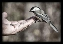 chickadee trust_workshop