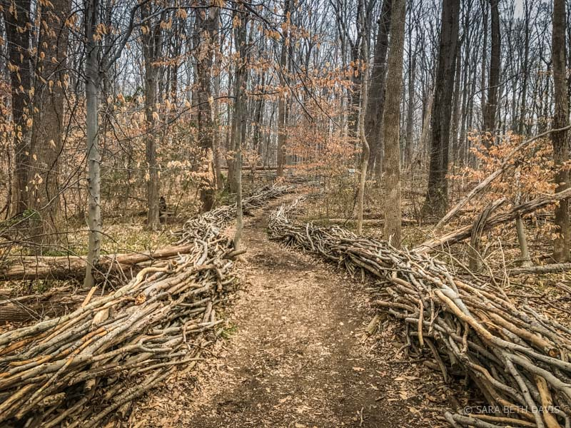 Hike 7 of 52 – Seneca Connector Trails in Seneca Tract