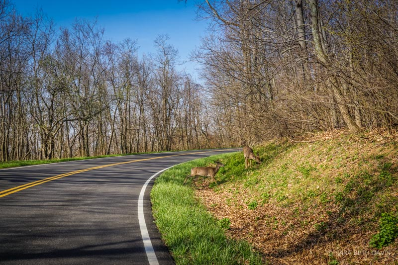 Early Spring Drive in Shenandoah National Park
