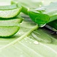 The Truth Behind Aloe Vera