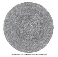 DNA Rose 441