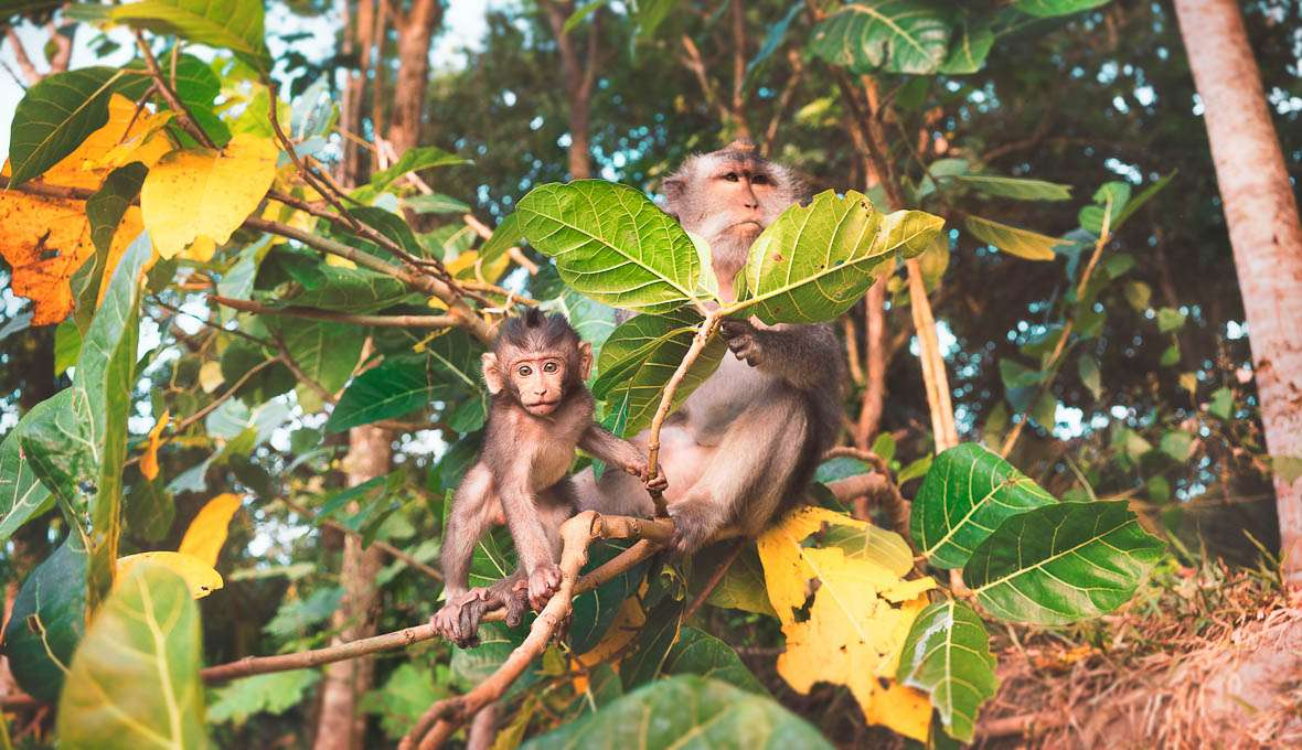 Monkeys - Travel Quotes