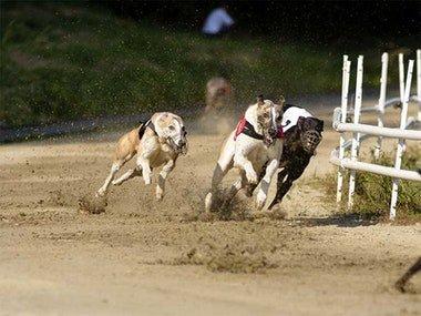 Newcastle Greyhound Racing