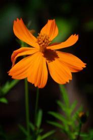 Snapshots: Flora & Fauna
