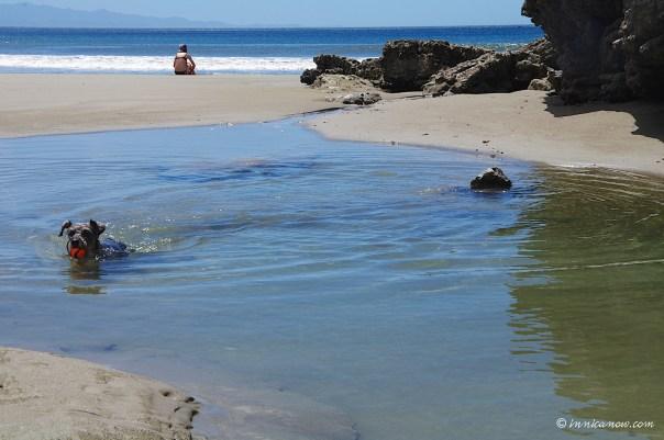 - Maggie cooling off in a tide pool: Playa Yankee: San Juan del, Nicaragua