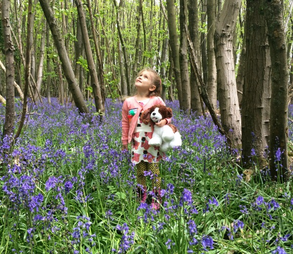addison in the bluebells