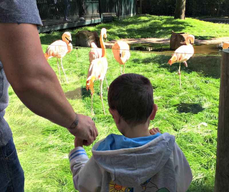 Grayson and the Flamingos