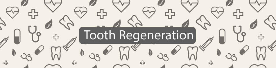 Tooth-Regeneration