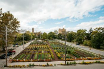 Michigan Urban Farming